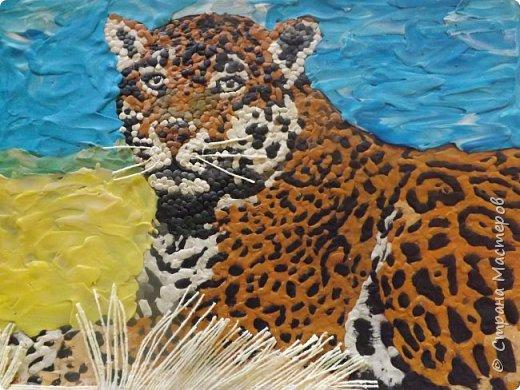 Переднеазиатский леопард   фото 1