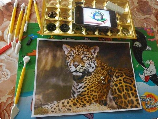 Переднеазиатский леопард   фото 3
