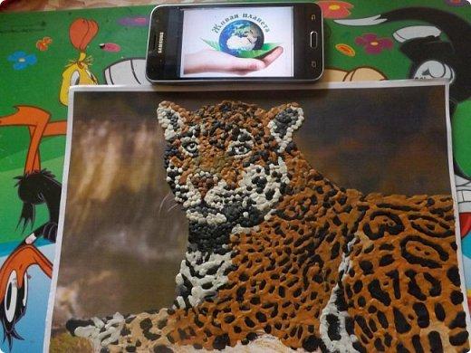 Переднеазиатский леопард   фото 6