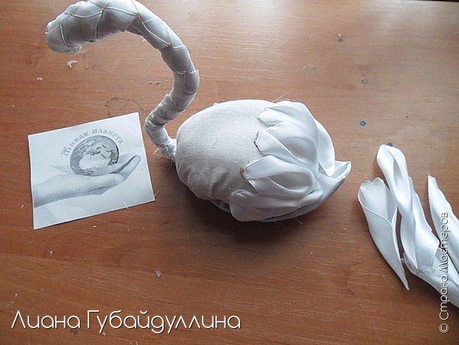 Белый лебедь-шипун  фото 7
