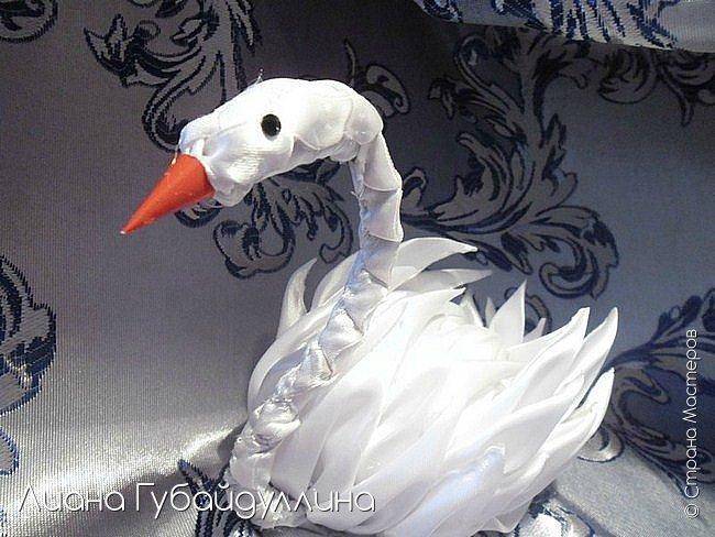 Белый лебедь-шипун  фото 9