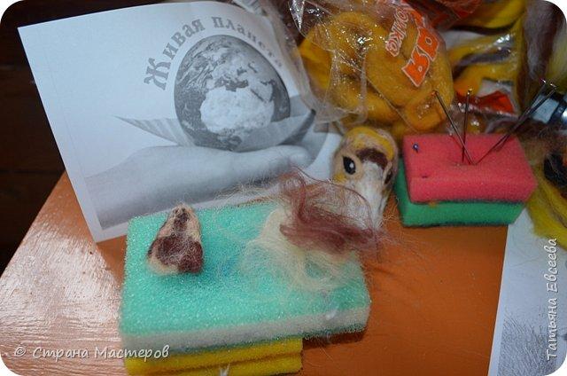Добрый день, уважаемые жители Страны Мастеров! Предлагаю Вашему вниманию очередную поделку сделанную в технике сухого валяния из шерсти. На этот раз - Алтайский горный баран или аргали, а также алтайский АРХАР. Алтайское название - кочкор.  Ovis ammon ammon (Linnaeus, 1758) Отряд Artiodactyla - Парнокопытные Семейство Bovidae - Полорогие фото 8
