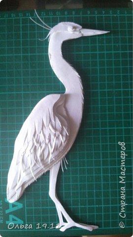 Серая цапля - санитар водоёмов. ( http://animalreader.ru/seraya-tsaplya-sanitar-vodoemov.html)  Вес взрослой серой цапли достигает 1,5 кг, а некоторые экземпляры вырастают и до 2 кг. Размах крыльев птицы составляет 1,5 – 1,75 м, а длина тела до 102 см. фото 11