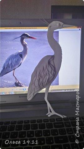 Серая цапля - санитар водоёмов. ( http://animalreader.ru/seraya-tsaplya-sanitar-vodoemov.html)  Вес взрослой серой цапли достигает 1,5 кг, а некоторые экземпляры вырастают и до 2 кг. Размах крыльев птицы составляет 1,5 – 1,75 м, а длина тела до 102 см. фото 12