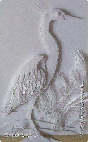 Серая цапля - санитар водоёмов. ( http://animalreader.ru/seraya-tsaplya-sanitar-vodoemov.html)  Вес взрослой серой цапли достигает 1,5 кг, а некоторые экземпляры вырастают и до 2 кг. Размах крыльев птицы составляет 1,5 – 1,75 м, а длина тела до 102 см. фото 2