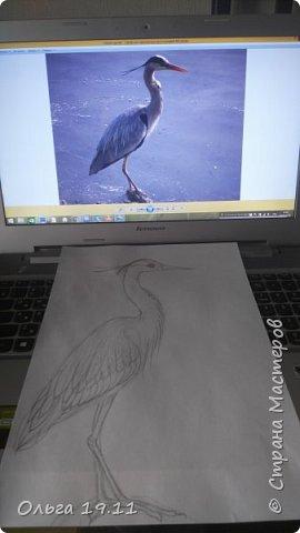 Серая цапля - санитар водоёмов. ( http://animalreader.ru/seraya-tsaplya-sanitar-vodoemov.html)  Вес взрослой серой цапли достигает 1,5 кг, а некоторые экземпляры вырастают и до 2 кг. Размах крыльев птицы составляет 1,5 – 1,75 м, а длина тела до 102 см. фото 3