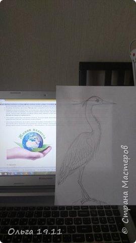 Серая цапля - санитар водоёмов. ( http://animalreader.ru/seraya-tsaplya-sanitar-vodoemov.html)  Вес взрослой серой цапли достигает 1,5 кг, а некоторые экземпляры вырастают и до 2 кг. Размах крыльев птицы составляет 1,5 – 1,75 м, а длина тела до 102 см. фото 5