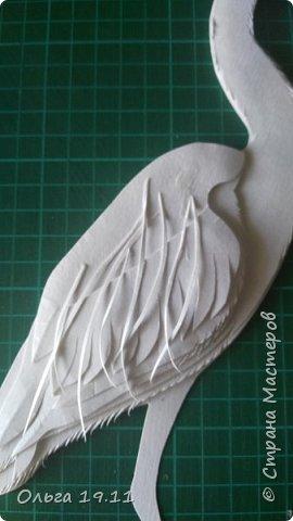 Серая цапля - санитар водоёмов. ( http://animalreader.ru/seraya-tsaplya-sanitar-vodoemov.html)  Вес взрослой серой цапли достигает 1,5 кг, а некоторые экземпляры вырастают и до 2 кг. Размах крыльев птицы составляет 1,5 – 1,75 м, а длина тела до 102 см. фото 10