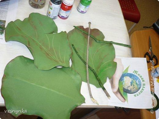 """Природа Алтая уникальна. Удивительное сочетание природных условий создало неповторимый облик его ландшафтов. Здесь можно встретить и сочные, пестрящие разнотравьем луга, и иссушенные зноем степи, унылые горные тундры и роскошные хвойные леса.  Семейство камнеломковых – Saxifragaceae Juss Народное название: монгольский, или чагирский чай.  Бадан толстолистный – многолетнее травянистое растение семейства камнеломковых. Растет на Алтае – по склонам гор, чаще северным, на каменистых почвах, глыбах, скалах, а также в темнохвойных (кедровых, пихтовых) и лиственных лесах. Благодаря ветвлению корневища он образует скученные сплошные заросли.  Лекарственные травы и растения Алтая Автор: Татьяна Злобина """"Целительные силы Алтая"""" фото 10"""