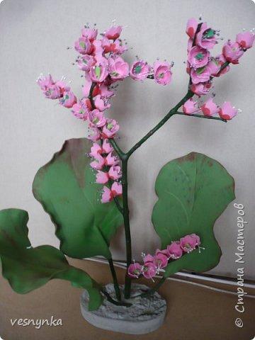 """Природа Алтая уникальна. Удивительное сочетание природных условий создало неповторимый облик его ландшафтов. Здесь можно встретить и сочные, пестрящие разнотравьем луга, и иссушенные зноем степи, унылые горные тундры и роскошные хвойные леса.  Семейство камнеломковых – Saxifragaceae Juss Народное название: монгольский, или чагирский чай.  Бадан толстолистный – многолетнее травянистое растение семейства камнеломковых. Растет на Алтае – по склонам гор, чаще северным, на каменистых почвах, глыбах, скалах, а также в темнохвойных (кедровых, пихтовых) и лиственных лесах. Благодаря ветвлению корневища он образует скученные сплошные заросли.  Лекарственные травы и растения Алтая Автор: Татьяна Злобина """"Целительные силы Алтая"""" фото 1"""