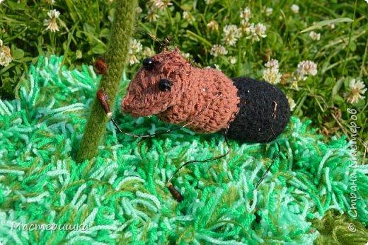 Продолжаю показывать работы моих девочек. На этот раз, будем знакомится с муравьём Долиходерус сибирский. При создании работы читали и смотрели только Красную книгу Алтая. фото 1
