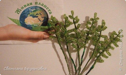 Маленькая роза. Название «Родиола» - уменьшительное от греческих слов rhodia или rhodon - роза, розовый, дословно - «маленькая роза»; из-за запаха надрезанных корней, сходного с ароматом розы. фото 4