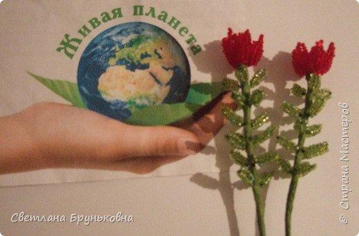 Маленькая роза. Название «Родиола» - уменьшительное от греческих слов rhodia или rhodon - роза, розовый, дословно - «маленькая роза»; из-за запаха надрезанных корней, сходного с ароматом розы. фото 5