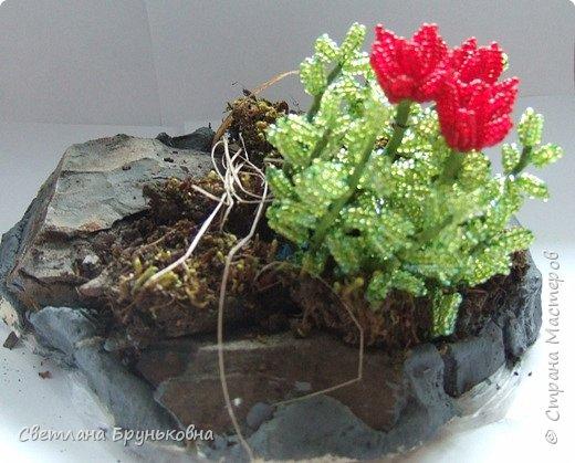 Маленькая роза. Название «Родиола» - уменьшительное от греческих слов rhodia или rhodon - роза, розовый, дословно - «маленькая роза»; из-за запаха надрезанных корней, сходного с ароматом розы. фото 1
