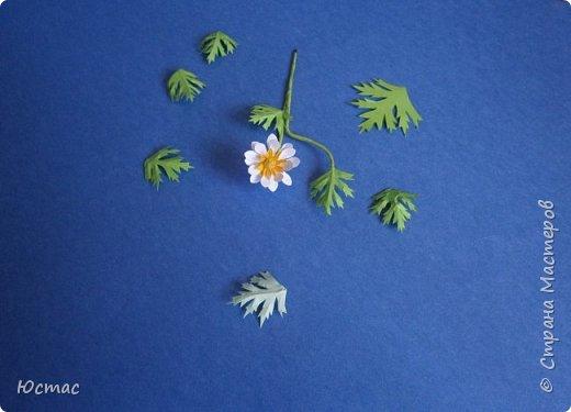 Это ветреница нежная. Произрастает у нас на Черноморском побережье Кавказа, в Краснодарском крае, Адыгее, в Ставропольском крае. Благодаря человеку занесена в Красную книгу исчезающих растений.. фото 9