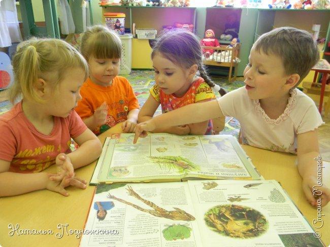 """..Зелёная жаба. Зовут """"Квакша"""". Появилась и посилилась у нас в группе детского сада в процессе проекта """"Эти  удивительные  существа -  лягушки и жабы"""" фото 19"""