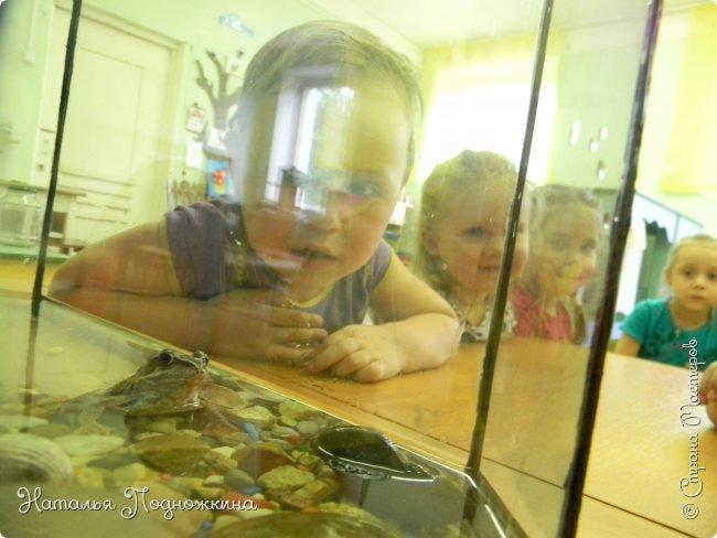 """..Зелёная жаба. Зовут """"Квакша"""". Появилась и посилилась у нас в группе детского сада в процессе проекта """"Эти  удивительные  существа -  лягушки и жабы"""" фото 20"""