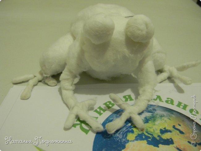 """..Зелёная жаба. Зовут """"Квакша"""". Появилась и посилилась у нас в группе детского сада в процессе проекта """"Эти  удивительные  существа -  лягушки и жабы"""" фото 8"""