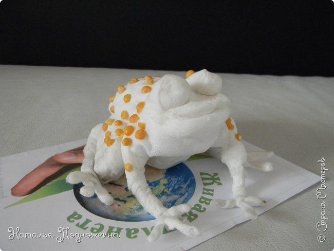 """..Зелёная жаба. Зовут """"Квакша"""". Появилась и посилилась у нас в группе детского сада в процессе проекта """"Эти  удивительные  существа -  лягушки и жабы"""" фото 11"""