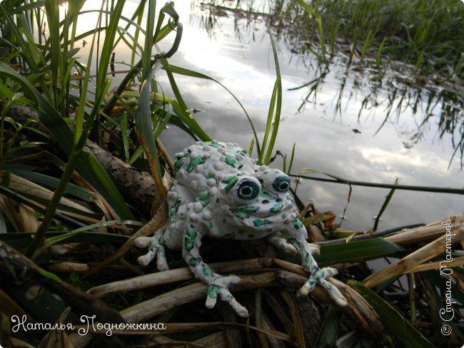 """..Зелёная жаба. Зовут """"Квакша"""". Появилась и посилилась у нас в группе детского сада в процессе проекта """"Эти  удивительные  существа -  лягушки и жабы"""" фото 1"""