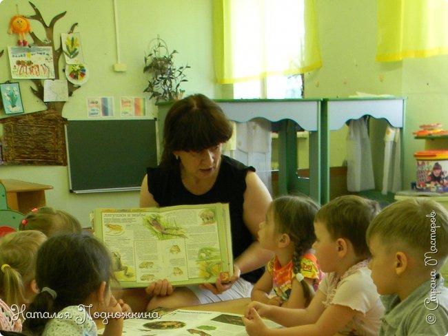 """..Зелёная жаба. Зовут """"Квакша"""". Появилась и посилилась у нас в группе детского сада в процессе проекта """"Эти  удивительные  существа -  лягушки и жабы"""" фото 18"""
