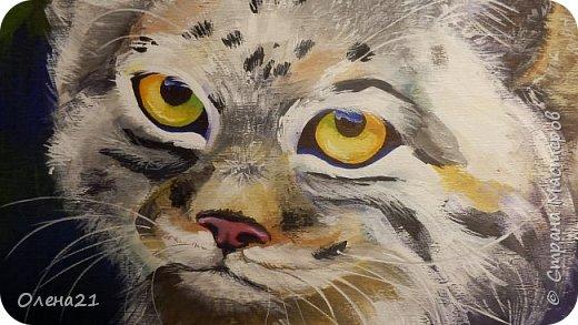 Моя работа посвящена манулу - дикому коту. Второе название этого животного палласов кот. По размерам похож на домашних кошек.  Говорят, что это самый медлительный и неповоротливый из всех диких котов, не умеет быстро бегать. Но мех у него самый пушистый и густой среди кошачьих. И еще кажется, будто мех припорошен снегом.  Взгляд исподлобья. На щеках - бакенбарды. Глаза желтые. Зрачки остаются круглыми.    фото 4