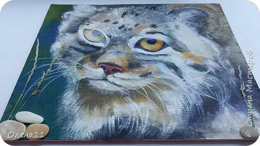 Моя работа посвящена манулу - дикому коту. Второе название этого животного палласов кот. По размерам похож на домашних кошек.  Говорят, что это самый медлительный и неповоротливый из всех диких котов, не умеет быстро бегать. Но мех у него самый пушистый и густой среди кошачьих. И еще кажется, будто мех припорошен снегом.  Взгляд исподлобья. На щеках - бакенбарды. Глаза желтые. Зрачки остаются круглыми.    фото 10