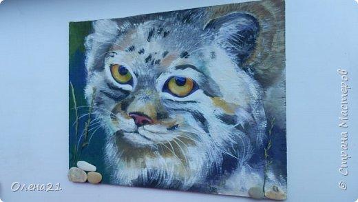 Моя работа посвящена манулу - дикому коту. Второе название этого животного палласов кот. По размерам похож на домашних кошек.  Говорят, что это самый медлительный и неповоротливый из всех диких котов, не умеет быстро бегать. Но мех у него самый пушистый и густой среди кошачьих. И еще кажется, будто мех припорошен снегом.  Взгляд исподлобья. На щеках - бакенбарды. Глаза желтые. Зрачки остаются круглыми.    фото 1