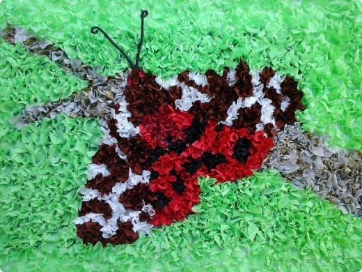 Бабочка медведица -кайа фото 1