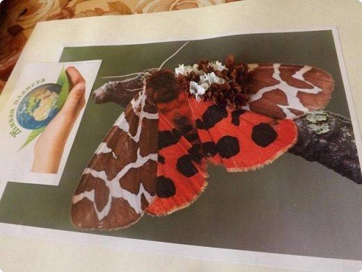 Бабочка медведица -кайа фото 5