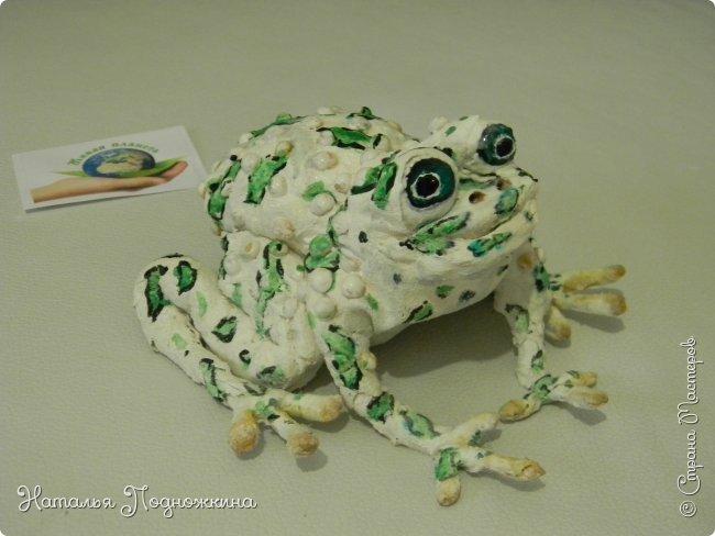 """..Зелёная жаба. Зовут """"Квакша"""". Появилась и посилилась у нас в группе детского сада в процессе проекта """"Эти  удивительные  существа -  лягушки и жабы"""" фото 3"""