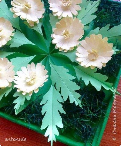 Адонис весенний - горицвет весенний, его яркие звездочки среди первых расцветают в лесу по весне. Но цветет он недолго, всего несколько недель.  фото 10