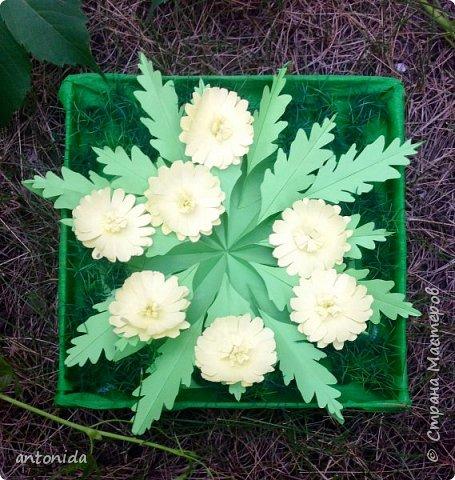 Адонис весенний - горицвет весенний, его яркие звездочки среди первых расцветают в лесу по весне. Но цветет он недолго, всего несколько недель.  фото 1