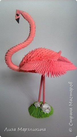 Розовые фламинго, пожалуй, одни из самых прекрасных и загадочных птиц на планете. Недаром эти грациозные птицы издавна становились героями легенд и преданий из-за своего необычного окраса и поведения. фото 5