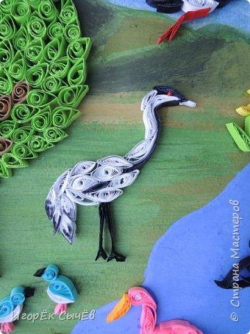 В своей работе я хочу отобразить многообразный вид пернатых занесенных в Красную книгу Алтайского края. Я постарался максимально точно передать всю красоту следующих птиц: Журавль-красавка, Черный аист, Обыкновенный фламинго, Розовый пеликан, Большая белая цапля, Турпан, Ходулочник, Кулик-сорока, Синий соловей. Птиц я разместил на фоне Алтайских гор возле озера Ая. Работа выполнена в технике Квиллинг. фото 2