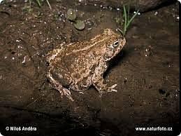 """Здравствуйте, уважаемые мастера и мастерицы! Представляю вам на суд свою вторую конкурсную работу под названием """"Черный журавль и камышовая жаба"""". Изделие выполнено в виде кусочка природы - небольшого участка болота, где спереди на берегу располагается гнездо с детенышами и парой журавлей, а на заднем плане - 2 камышовые жабы.  фото 25"""