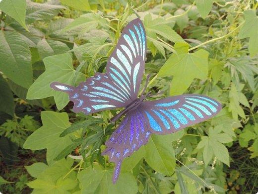 Редко кому повезет увидеть это чудо природы в естественных условиях. фото 2