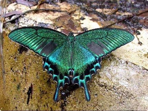 Редко кому повезет увидеть это чудо природы в естественных условиях. фото 22