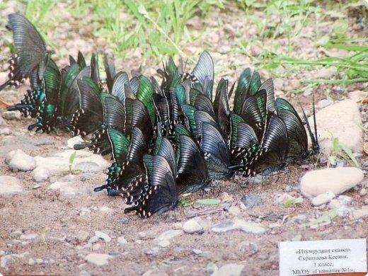 Редко кому повезет увидеть это чудо природы в естественных условиях. фото 23