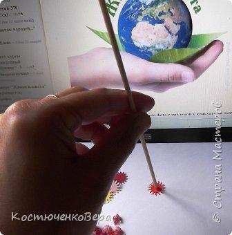 Родиола морозная или Красная щетка очень редкое растение. Щеткой прозвали за многочисленные листья на стеблях растения или за жесткость куртинок, напоминающих щётку. Это растение я нашла в Красной книге Горного Алтая http://www.plantarium.ru/page/redbook/id/65.html. Высота ок. 20 см, соцветие собрано в густой щиток. Цветки  могут быть розовые, красные, желтые, кремовые.  В одном растение несколько стеблей собранных в пучок - букет, прямые или слегка изогнутые. Листья могут быть разных оттенков зеленого или красного цвета. Растение целебное. В медицинских целях используется корень. Предпочитает расти в высокогорье, подходит для альпийских горок.  фото 5