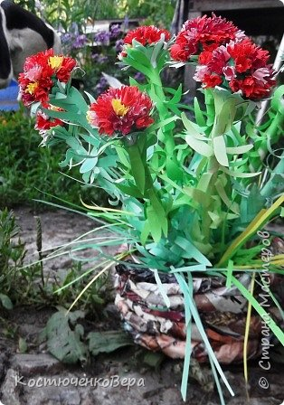 Родиола морозная или Красная щетка очень редкое растение. Щеткой прозвали за многочисленные листья на стеблях растения или за жесткость куртинок, напоминающих щётку. Это растение я нашла в Красной книге Горного Алтая http://www.plantarium.ru/page/redbook/id/65.html. Высота ок. 20 см, соцветие собрано в густой щиток. Цветки  могут быть розовые, красные, желтые, кремовые.  В одном растение несколько стеблей собранных в пучок - букет, прямые или слегка изогнутые. Листья могут быть разных оттенков зеленого или красного цвета. Растение целебное. В медицинских целях используется корень. Предпочитает расти в высокогорье, подходит для альпийских горок.  фото 2