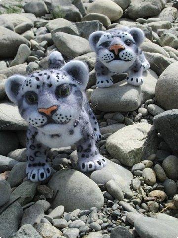 Рассказать хочу вам, всем,  О самой красивой кошке на свете!  Ирбис – кошка снежная,  Учёными мало известная.  Живёт высоко в горах,  Устраивает логово в камнях.  Кошка-ирбис – заботливая мама,  За детьми следит неустанно.  Днём катается с ними с горки,  Ночью их укрывает хвостом в норке.  Не путайте с леопардом и рысью:  У рыси на ушках есть тёмные кисти,  У леопарда цвет шерсти другой,  Снежный барс – совсем не такой!  Шерсть у него длинная, пушистая,  Как ни у одного из хищников.  Цвет шерсти – светло-серый,  По нему чёрные пятна рассеяны.  Лапы массивные, широкие.  Ушки закруглённые, короткие.  Ирбис – барс снежный,  Кстати, довольно-таки любезный.  Если человек ему зла не желает –  На людей он никогда не нападает!  Барс снежный занесён в Красную книгу,  Потому что совсем исчезает из виду.  В России барсов осталось штук двести,  Давайте поможем этим животным вместе.   Автор: Данил Костин, ученик 2 класса  средней школы посёлка Локня Псковской области.      фото 17