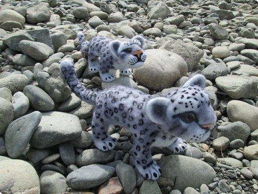 Рассказать хочу вам, всем,  О самой красивой кошке на свете!  Ирбис – кошка снежная,  Учёными мало известная.  Живёт высоко в горах,  Устраивает логово в камнях.  Кошка-ирбис – заботливая мама,  За детьми следит неустанно.  Днём катается с ними с горки,  Ночью их укрывает хвостом в норке.  Не путайте с леопардом и рысью:  У рыси на ушках есть тёмные кисти,  У леопарда цвет шерсти другой,  Снежный барс – совсем не такой!  Шерсть у него длинная, пушистая,  Как ни у одного из хищников.  Цвет шерсти – светло-серый,  По нему чёрные пятна рассеяны.  Лапы массивные, широкие.  Ушки закруглённые, короткие.  Ирбис – барс снежный,  Кстати, довольно-таки любезный.  Если человек ему зла не желает –  На людей он никогда не нападает!  Барс снежный занесён в Красную книгу,  Потому что совсем исчезает из виду.  В России барсов осталось штук двести,  Давайте поможем этим животным вместе.   Автор: Данил Костин, ученик 2 класса  средней школы посёлка Локня Псковской области.      фото 15