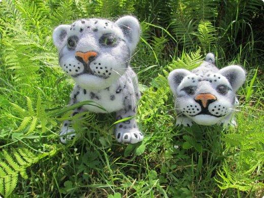Рассказать хочу вам, всем,  О самой красивой кошке на свете!  Ирбис – кошка снежная,  Учёными мало известная.  Живёт высоко в горах,  Устраивает логово в камнях.  Кошка-ирбис – заботливая мама,  За детьми следит неустанно.  Днём катается с ними с горки,  Ночью их укрывает хвостом в норке.  Не путайте с леопардом и рысью:  У рыси на ушках есть тёмные кисти,  У леопарда цвет шерсти другой,  Снежный барс – совсем не такой!  Шерсть у него длинная, пушистая,  Как ни у одного из хищников.  Цвет шерсти – светло-серый,  По нему чёрные пятна рассеяны.  Лапы массивные, широкие.  Ушки закруглённые, короткие.  Ирбис – барс снежный,  Кстати, довольно-таки любезный.  Если человек ему зла не желает –  На людей он никогда не нападает!  Барс снежный занесён в Красную книгу,  Потому что совсем исчезает из виду.  В России барсов осталось штук двести,  Давайте поможем этим животным вместе.   Автор: Данил Костин, ученик 2 класса  средней школы посёлка Локня Псковской области.      фото 20
