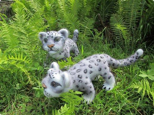 Рассказать хочу вам, всем,  О самой красивой кошке на свете!  Ирбис – кошка снежная,  Учёными мало известная.  Живёт высоко в горах,  Устраивает логово в камнях.  Кошка-ирбис – заботливая мама,  За детьми следит неустанно.  Днём катается с ними с горки,  Ночью их укрывает хвостом в норке.  Не путайте с леопардом и рысью:  У рыси на ушках есть тёмные кисти,  У леопарда цвет шерсти другой,  Снежный барс – совсем не такой!  Шерсть у него длинная, пушистая,  Как ни у одного из хищников.  Цвет шерсти – светло-серый,  По нему чёрные пятна рассеяны.  Лапы массивные, широкие.  Ушки закруглённые, короткие.  Ирбис – барс снежный,  Кстати, довольно-таки любезный.  Если человек ему зла не желает –  На людей он никогда не нападает!  Барс снежный занесён в Красную книгу,  Потому что совсем исчезает из виду.  В России барсов осталось штук двести,  Давайте поможем этим животным вместе.   Автор: Данил Костин, ученик 2 класса  средней школы посёлка Локня Псковской области.      фото 18