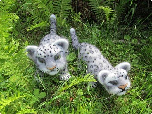 Рассказать хочу вам, всем,  О самой красивой кошке на свете!  Ирбис – кошка снежная,  Учёными мало известная.  Живёт высоко в горах,  Устраивает логово в камнях.  Кошка-ирбис – заботливая мама,  За детьми следит неустанно.  Днём катается с ними с горки,  Ночью их укрывает хвостом в норке.  Не путайте с леопардом и рысью:  У рыси на ушках есть тёмные кисти,  У леопарда цвет шерсти другой,  Снежный барс – совсем не такой!  Шерсть у него длинная, пушистая,  Как ни у одного из хищников.  Цвет шерсти – светло-серый,  По нему чёрные пятна рассеяны.  Лапы массивные, широкие.  Ушки закруглённые, короткие.  Ирбис – барс снежный,  Кстати, довольно-таки любезный.  Если человек ему зла не желает –  На людей он никогда не нападает!  Барс снежный занесён в Красную книгу,  Потому что совсем исчезает из виду.  В России барсов осталось штук двести,  Давайте поможем этим животным вместе.   Автор: Данил Костин, ученик 2 класса  средней школы посёлка Локня Псковской области.      фото 19