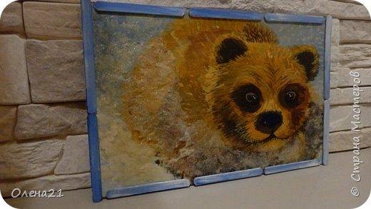 Бурый медведь фото 1