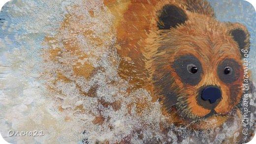 Бурый медведь фото 9