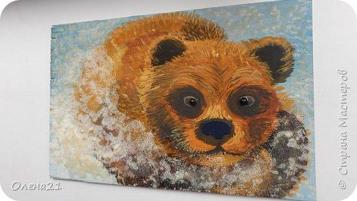 Бурый медведь фото 10