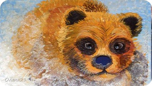 Бурый медведь фото 12